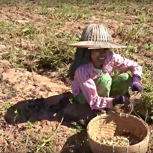 video-myanmar-alimentazione.jpg