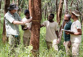 Luangwa-Community-Forests-Project-10.jpg