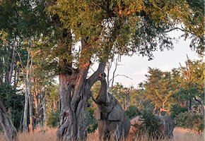 Luangwa-Community-Forests-Project-12.jpg