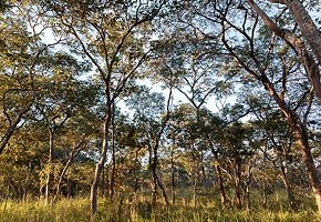 Luangwa-Community-Forests-Project-8.jpg