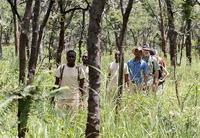 Luangwa-Community-Forests-Project-9.jpg