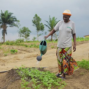 A new kind of farming in the Congo