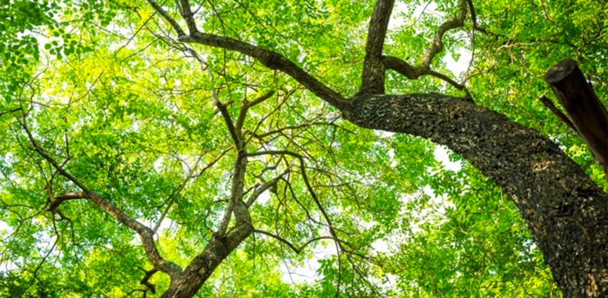 Protection and conservation of forests