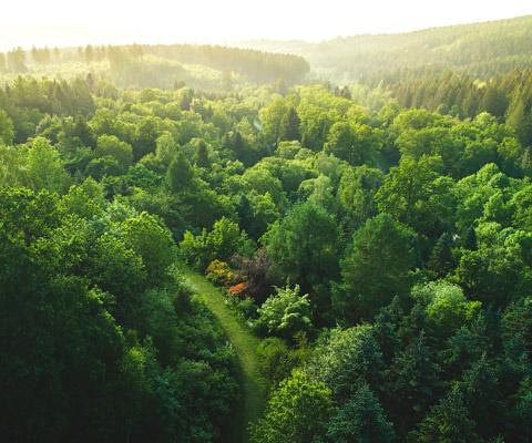 La protezione e conservazione delle foreste: un importante elemento di mitigazione delle emissioni