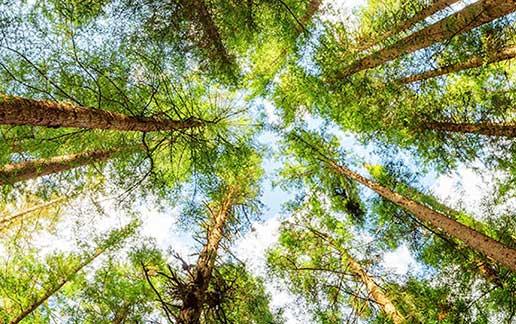 Proteggere l'ambiente: un obiettivo comune
