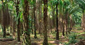 Posizione Eni sulle biomasse