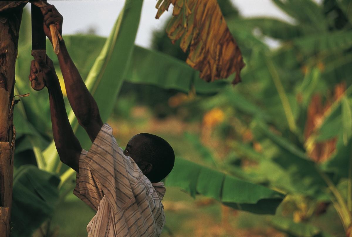 i progetti di sostenibilit di eni in nigeria eni
